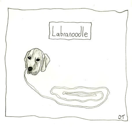 labranoodlecartoon