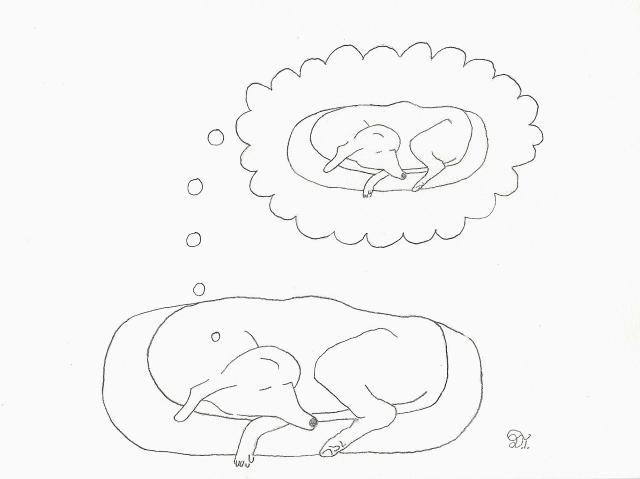 DogSleepingRedo2